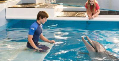 Due clip de L'incredibile storia di Winter il delfino 2, da oggi al cinema