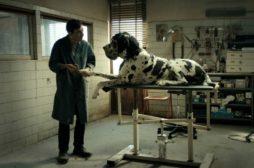 Fuori programma al TFF: docufilm sull'attore di Dogman