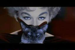 Pellicola & Pelliccia: Il gatto nel cinema – 1 parte