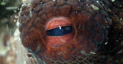 My Octopus Teacher – Il mio Amico in Fondo al Mare di P. Ehrlich e J. Reed – Netflix